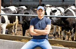 Farmer at farm with dairy cows. Portrait of a farmer among cows on a farm royalty free stock images