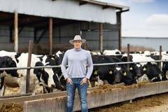 Farmer on farm dairy cows. Farmer is working on farm dairy cows royalty free stock photo