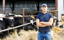 Farmer at farm with dairy cows. Farmer is working on cow farm royalty free stock images