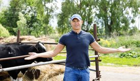 Farmer at farm with dairy cows. Farmer is working on cow farm stock photo