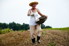 Farmer. Throwing Fertilizer by Hand Stock Images