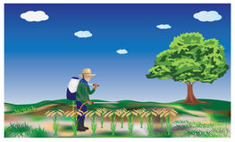 The farmer. Farmers pesticides in rice  design Stock Images