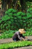Farmer farming Stock Image