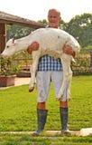 Farmer feeding a baby white cow Stock Photo