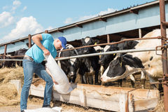 Farmer feeding cows in farm Stock Photo