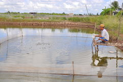 A farmer is feeding fish in his small own pond in the mekong delta of Vietnam Royalty Free Stock Image
