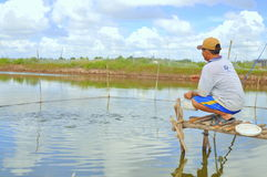A farmer is feeding fish in his small own pond in the mekong delta of Vietnam Stock Images