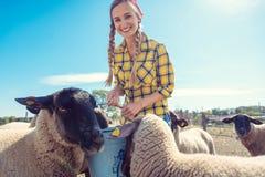 Free Farmer Feeding Her Sheep On The Farm Royalty Free Stock Image - 159350356