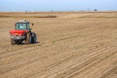 Farmer fertilizing soybean residues field Stock Images