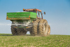 Farmer fertilizing wheat with nitrogen, phosphorus, potassium fertilizer.  Stock Photo