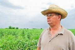 Farmer on a field. Farmer on a sun flower field Stock Photos
