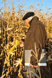 Farmer in field. Calm farmer in maize field Royalty Free Stock Images