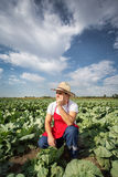 Farmer in the field of cabbage with blue sky Stock Images