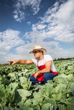 Farmer in the field of cabbage with blue sky Royalty Free Stock Photo