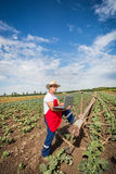 Farmer in the field of cabbage with blue sky Stock Image