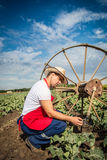 Farmer in the field of cabbage with blue sky Royalty Free Stock Images