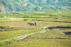 Farmer on field at the North of Vietnam Stock Images