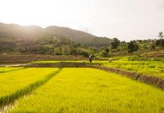 Farmer in the field Stock Photo