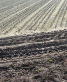 Farmer field rows planted with tractor tracks Stock Photos