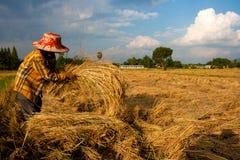 Farmer in field Stock Photography
