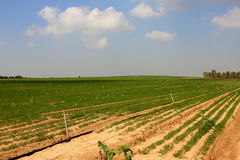 Farmer field. In the south of Israel at spring Royalty Free Stock Photos