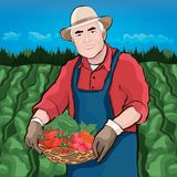 Farmer in field, vector illustration, colorful cartoon graphic drawing. Elderly men keep in hand basket of fresh vegetables. Against the background of fields Royalty Free Stock Photo