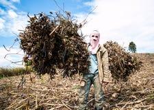 Farmer in field. Farmer working in the field Royalty Free Stock Photography