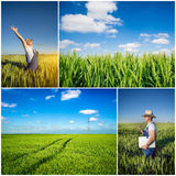 Farmer fields collage Royalty Free Stock Images