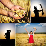 Farmer fields collage Stock Image