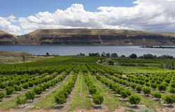 Farmer Fields Orchards Fruit Trees Columbia River Gorge Royalty Free Stock Images