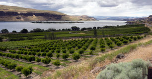 Farmer Fields Orchards Fruit Trees Columbia River Gorge Royalty Free Stock Photo