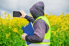 Farmer filmed with tablet PC yellow rape field Royalty Free Stock Image