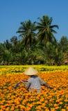 A farmer on flower field in Mekong Delta, Vietnam Royalty Free Stock Image