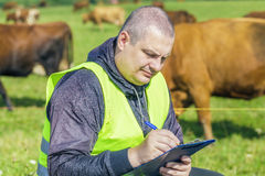 Farmer with folder near the cows at pasture. Farmer with PC near the cows at pasture on a sunny day stock photo