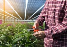 Farmer fresh vegetables, agriculture food production concept agr Stock Images