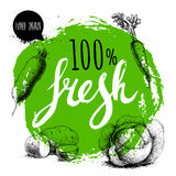 Farmer 100% fresh veggies design template. Green rough circle with hand painted letters. Engraving sketch style vegetables. Potato. Es, carrotwith leafs, beet Royalty Free Stock Photos