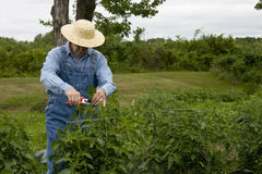Farmer in garden Royalty Free Stock Images