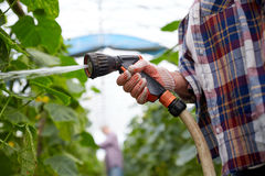 Farmer with garden hose watering at greenhouse Stock Images