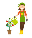 Farmer Gardener Woman with Watering Can and Tomato Plant in Mode. Rn Flat Style Vector Illustration EPS10 Royalty Free Stock Image