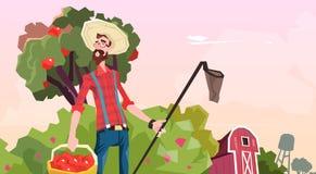 Farmer Gather Apples In Garden Fruit Harvest. Flat Vector Illustration royalty free illustration