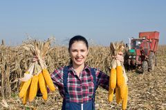 Farmer girl with corn cobs in hands Royalty Free Stock Photos