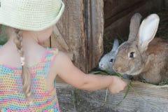 Farmer girl feeding cute domestic rabbits with grass. Outdoors Stock Photos