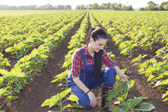 Farmer girl looking at sunflower leaves Royalty Free Stock Photo
