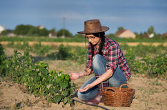 Farmer girl at raspberry plantation Royalty Free Stock Image
