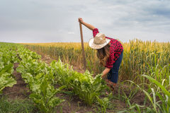 Farmer girl in the sugar beet field. Farmer girl working in the sugar beet field Royalty Free Stock Image