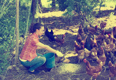 Farmer giving feeding chickens on poultry farm Stock Photography