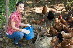 Farmer giving feeding stuff to chickens Royalty Free Stock Photo