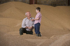 Farmer and grandson cupping wheat grains on grain heap Royalty Free Stock Photography