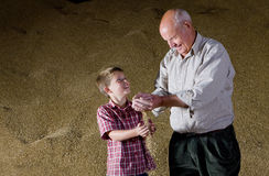 Farmer and grandson holding wheat grains Royalty Free Stock Photography