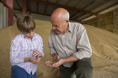 Farmer and grandson looking at wheat grains Stock Photos